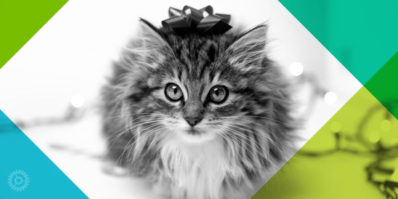 Kitten With Bow on Head